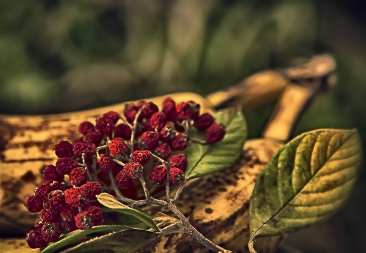 autumn - photography, fruits - pierocefaloni | ello