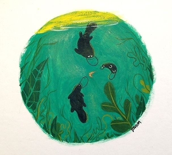 Platypus - gouache, painting, platypus - bshum | ello