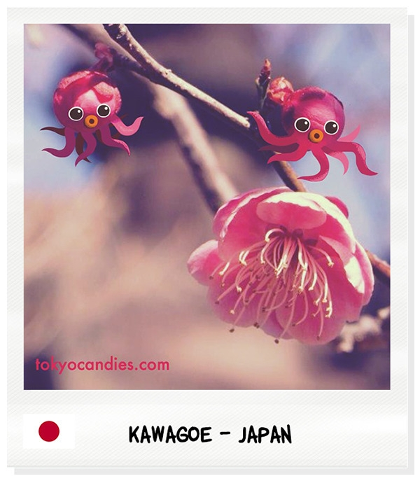 japan, sakura, flower, blossom - tokyocandies-1186 | ello