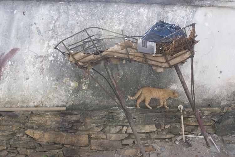 Cat Wall Garbage Bin (Ouro Pret - gaiagenesis | ello