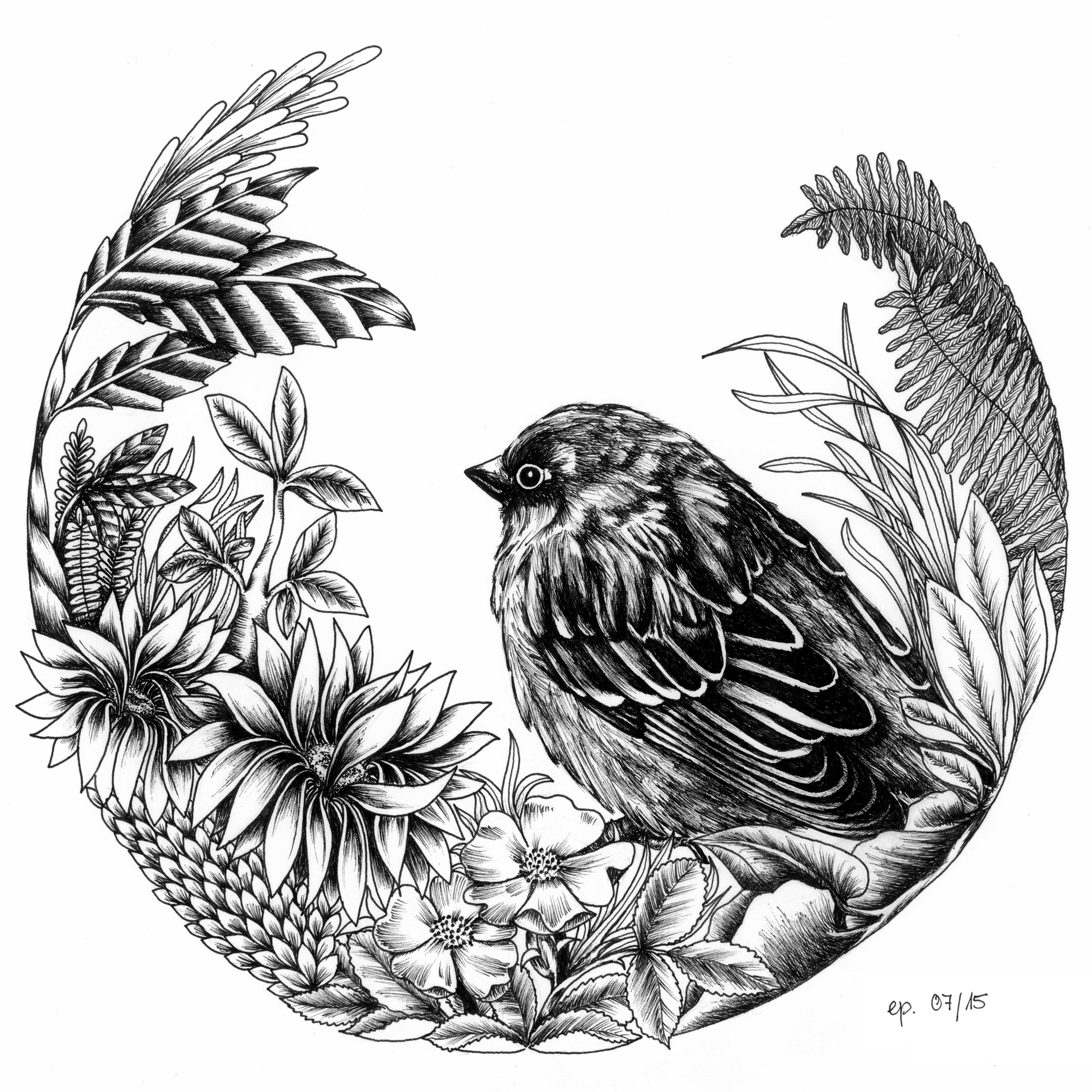 Sparrow - sparrow, illustration - ellenparzer | ello
