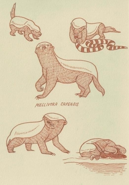 studies - mellivora capensis - brushpen - cat-8775 | ello