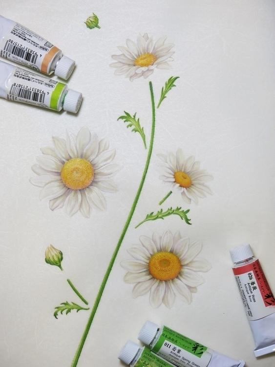Camomile - botanicalart, botanical - karenkluglein | ello