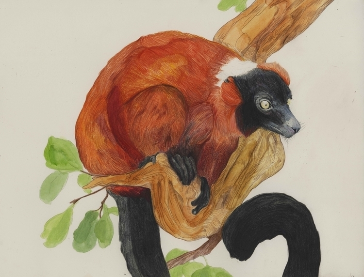 Red Ruffed Lemur - coloredpencil - katherinehenri | ello