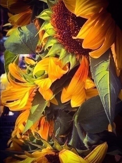 Sunflowers - exinerartstudio | ello