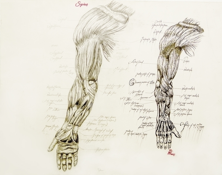 Anatomy Arm - illustration, drawing - aliziagonzalez | ello