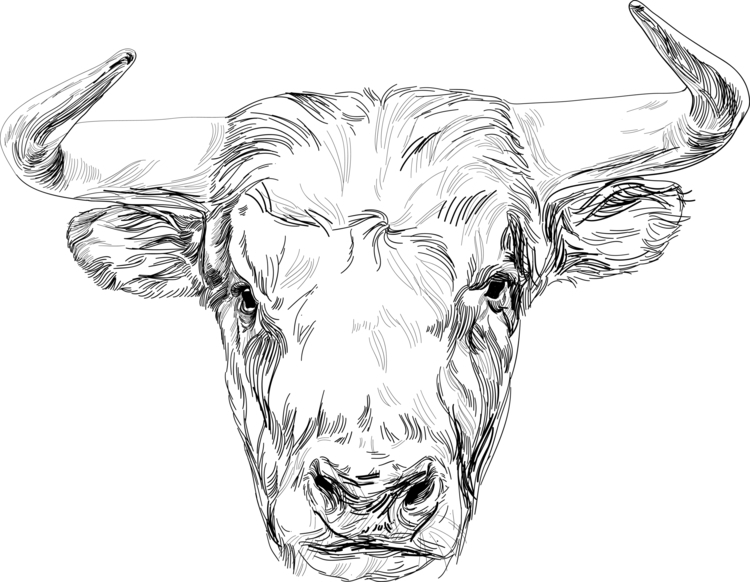 Line art Bull illustration - animal - gretaberlin | ello