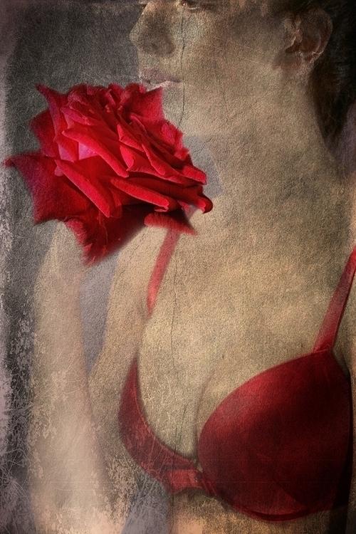 SCENT - roses, flowers, girl, digital - carmenvelcic | ello