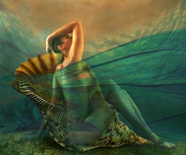 SHELL - shell, sensual, digital - carmenvelcic | ello