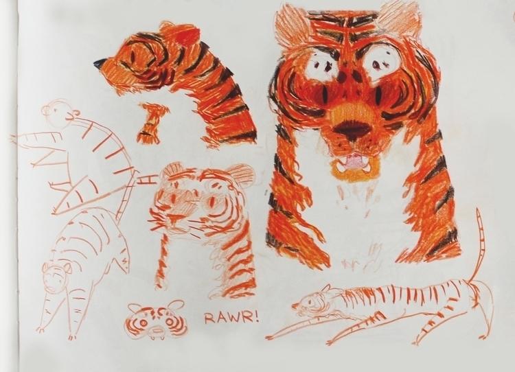 Tiger sketches - tiger, pencil, colour - klaudrawstuff | ello