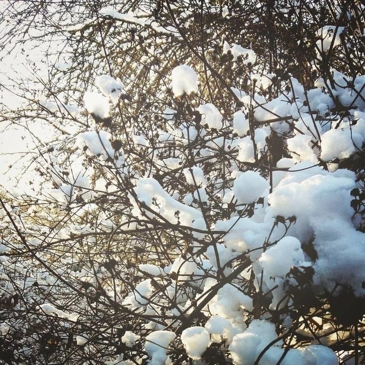 nature, latvia, latvija, snow - saffiri   ello