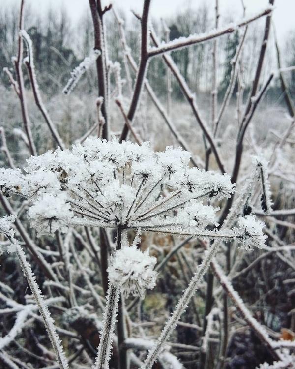 photography, nature, naturebeauty - saffiri | ello