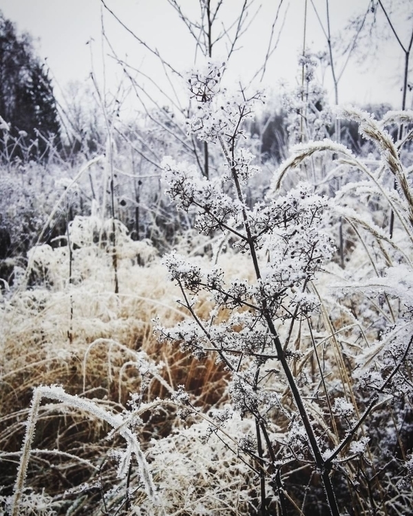 photography, nature, latvija - saffiri | ello