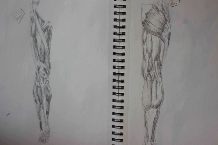 Leg Muscles - illustration, anatomy - mhettich | ello