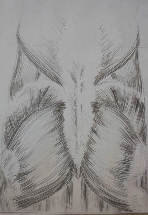 Muscles - illustration, drawing - mhettich | ello