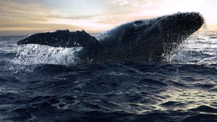 King sea - kobushenko | ello