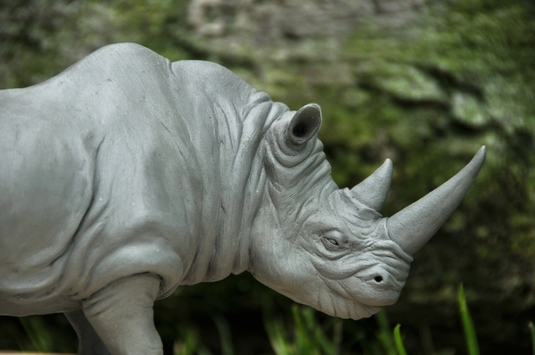 Rhinoceros sculpt, 6 long, poly - heliot-4253 | ello