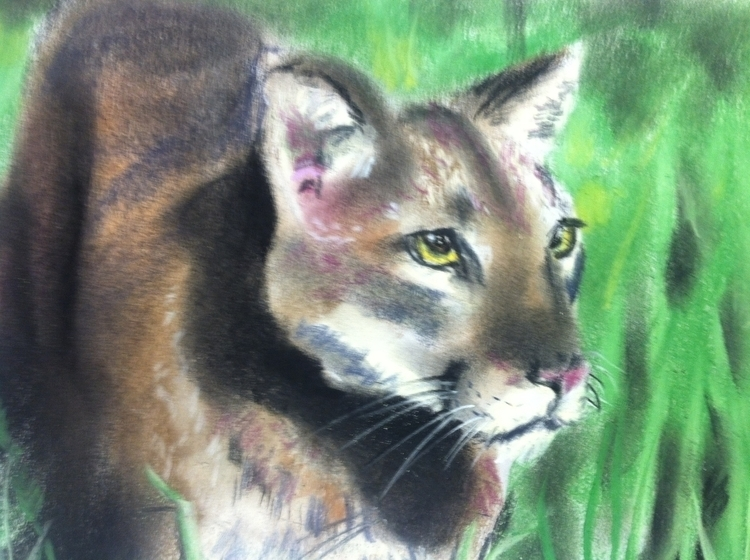 cougar - mountainlion, catamount - chimerikel | ello