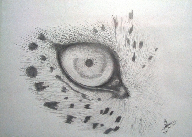 Leopard eye - leopard, drawing, sketch - marcossolis | ello