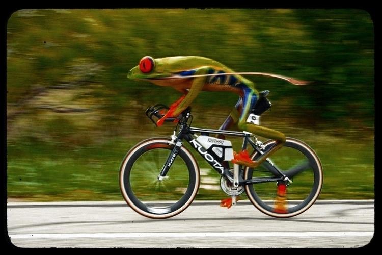 fun manipulation!!! frog riding - alexanderchalooupka | ello