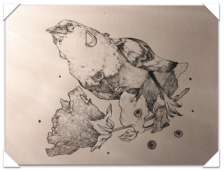 Pájaro - pencildrawing - jesusmendoza | ello