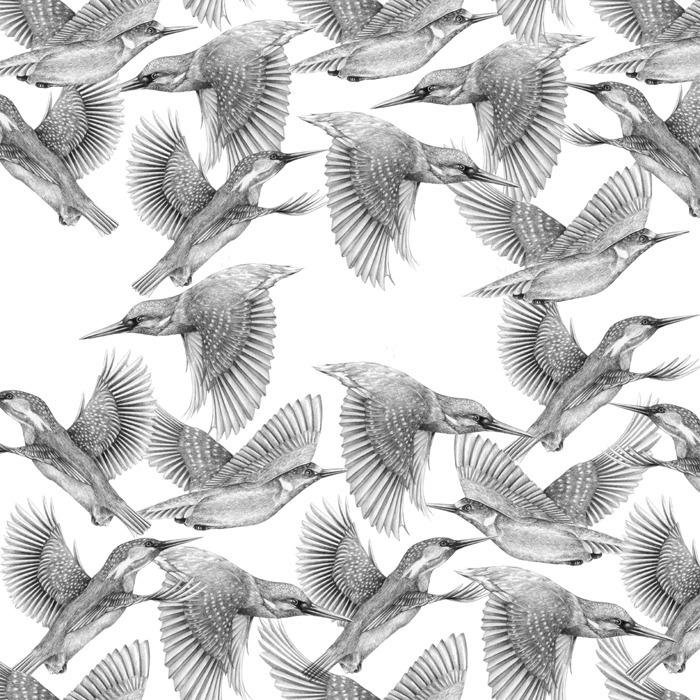 Extinction - Kingfishers - carolewilmet | ello