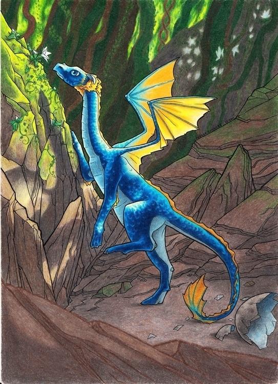 Baby Dragon - coloredpencil, dragon - catnipandcocoa | ello