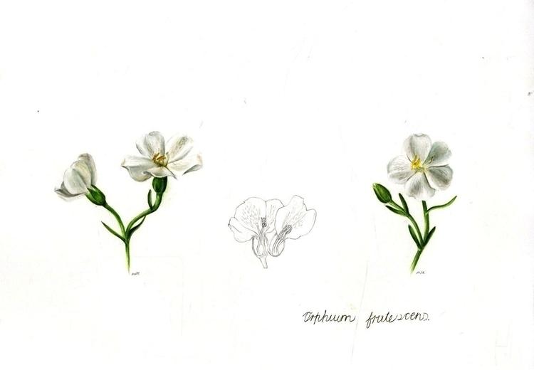 White flower - illustration, botanical - marikeleroux | ello