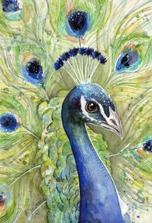 Peacock Watercolor - peacock, feather - olechkadesign | ello