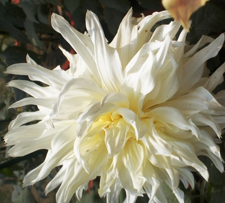 beauties - photography, flowers - baljitchadha | ello