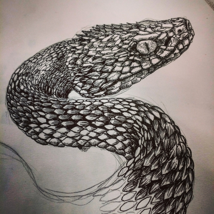 Viper illustration. Dip pen ind - polkip | ello