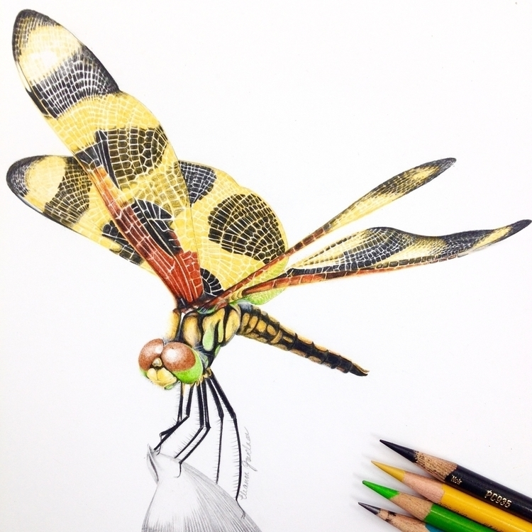 Dragonfly Study - illustration, drawing - eleandmac | ello
