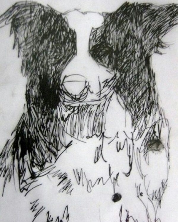 Border collie - dogs, ink, herdingdog - kleckerlabor-5193 | ello