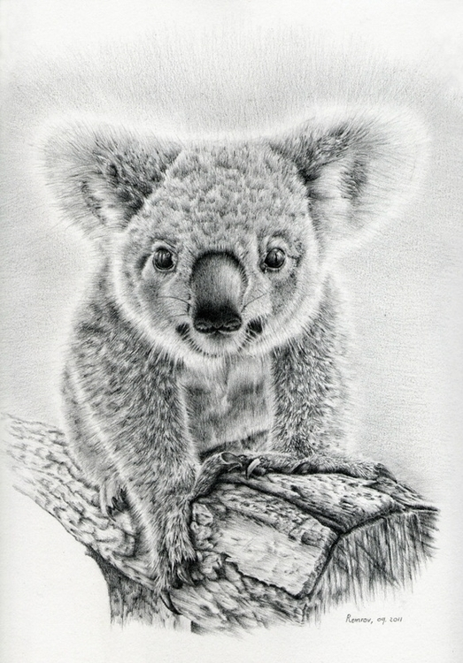 Koala Twinkles drawing - koala, wildlife - remrov | ello