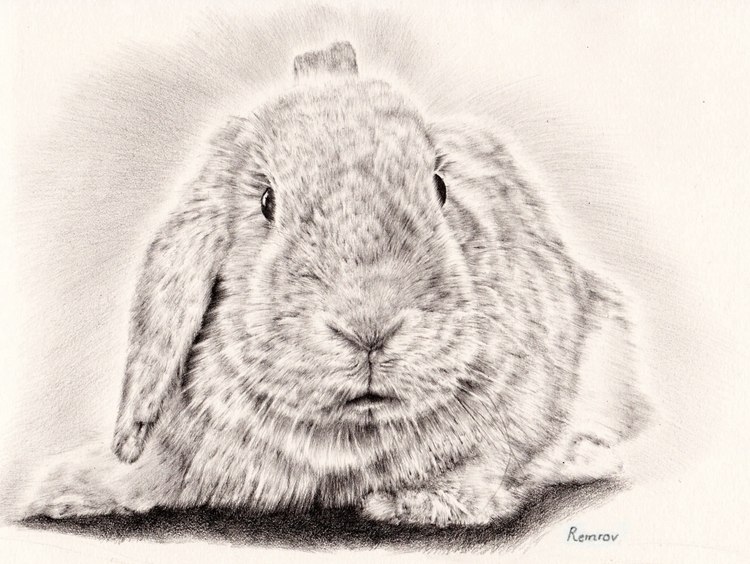 Bunny pencil drawing - bunny, cute - remrov | ello