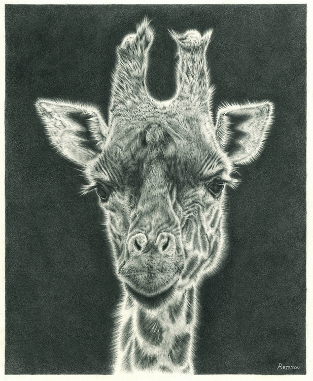 Giraffe pencil drawing - giraffe - remrov | ello