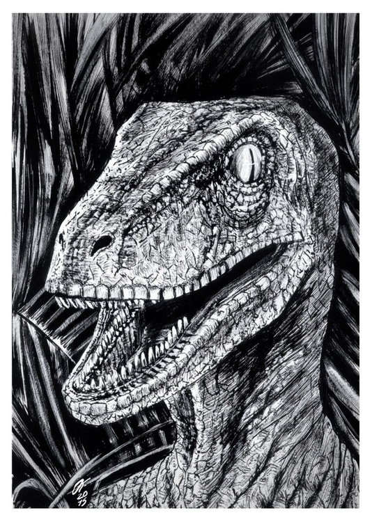 Velociraptor (Traditional Ink - illustration - oscartriana | ello