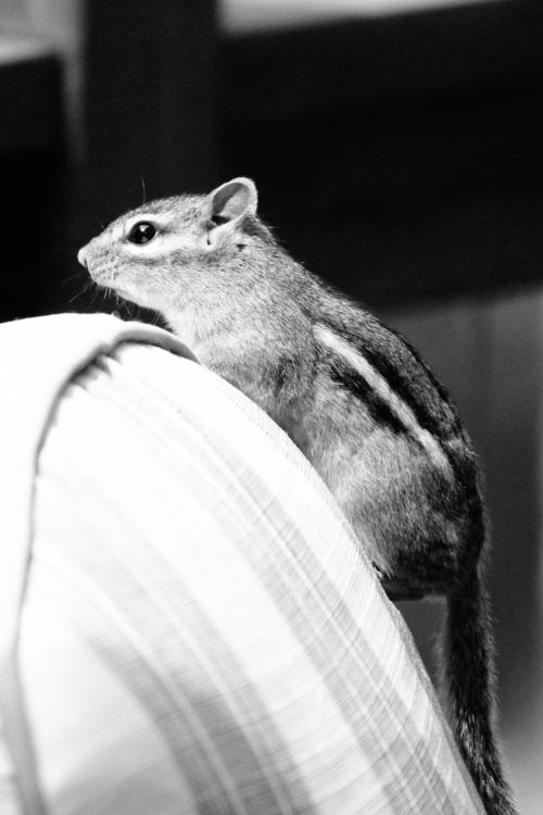 chipmunk friend - photography, animals - katiewaye | ello
