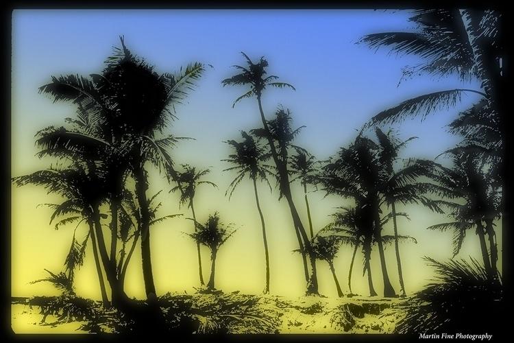 Miami Sunset Dancing Palms - martfine | ello
