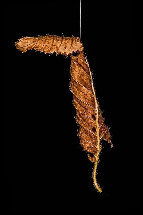 Hanging thread - photography, photoshop - pierocefaloni | ello