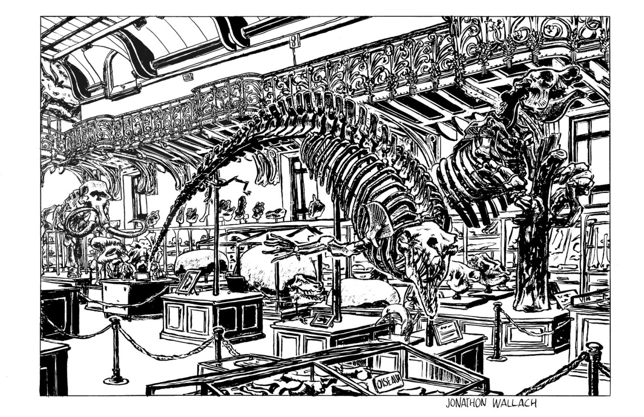 Paris Museum Natural History - Illustration - camperjon | ello