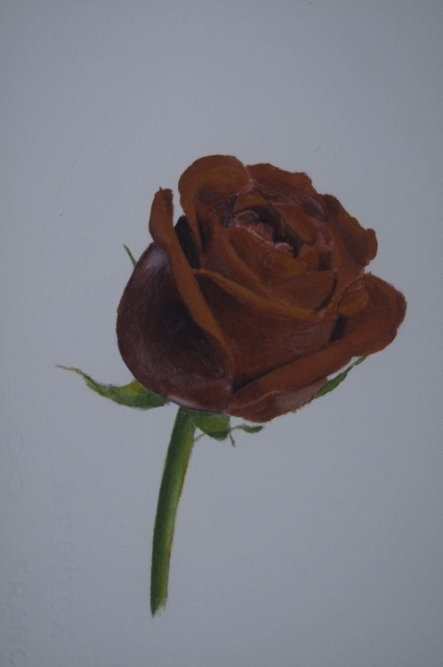 Watercolour Rose - waynemiller | ello