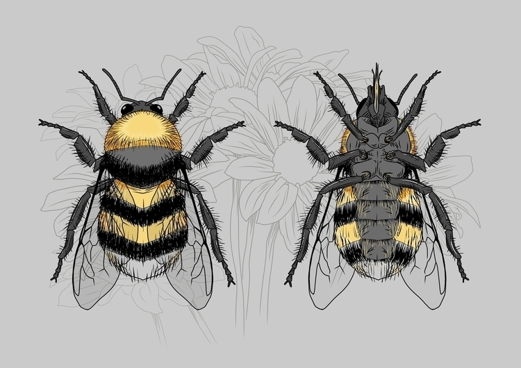 Bumble Bee - illustration, Insect - bigcrunch | ello
