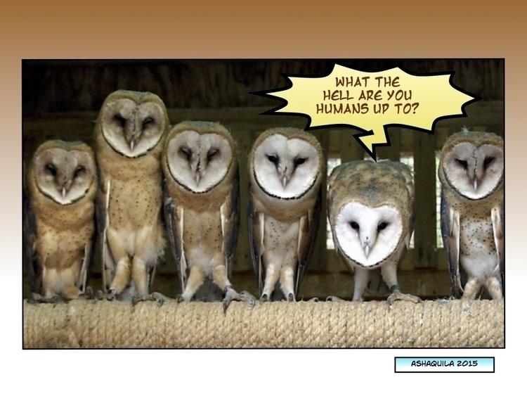 hell humans - owl,owls,wiseowls,stupidhumans - metabaron777 | ello