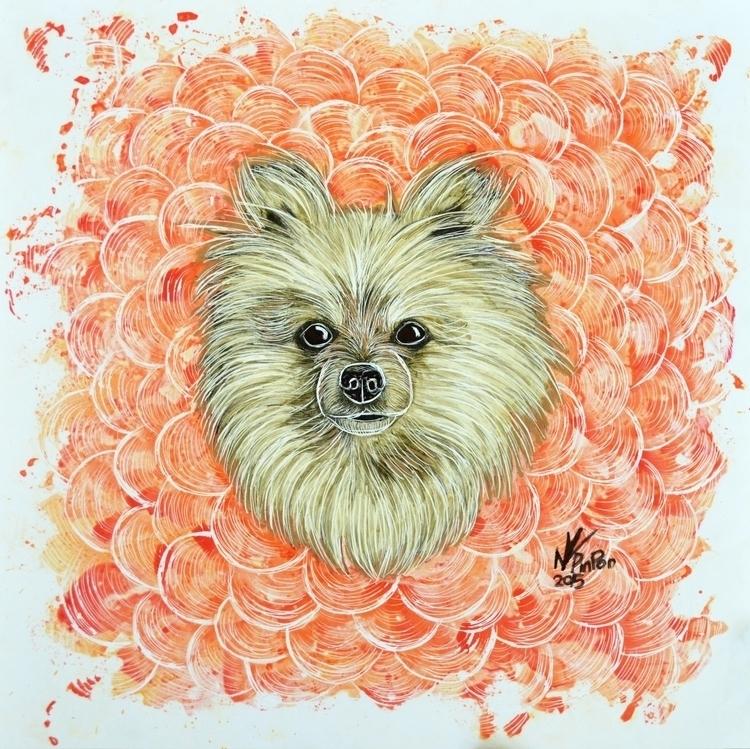 Roma - dog, portrait, pomeranian - alejandropinpon | ello