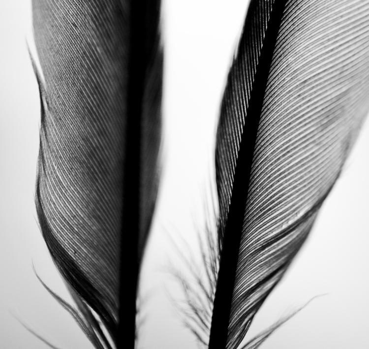 photography, macro, feathers - juliahs-1141 | ello
