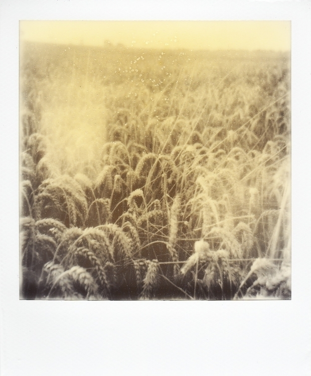 photography, polaroid, field - juliahs-1141 | ello
