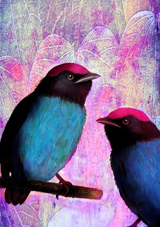 tangara, bird - amandaloyolla | ello