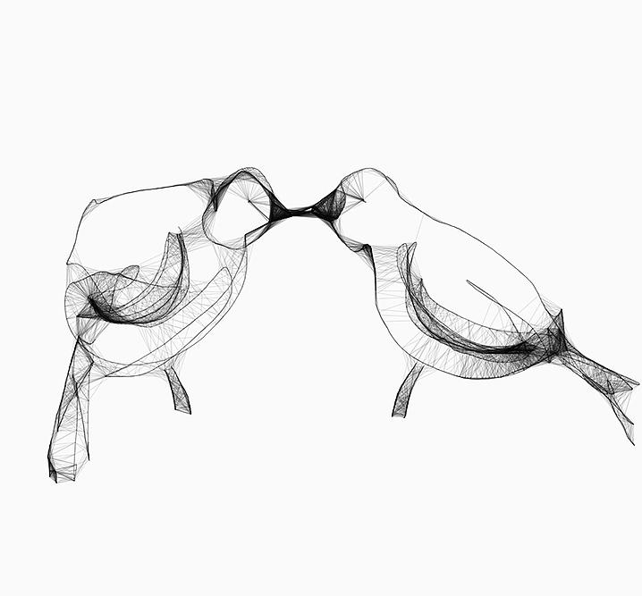 Lovebirds - animal - siguni | ello