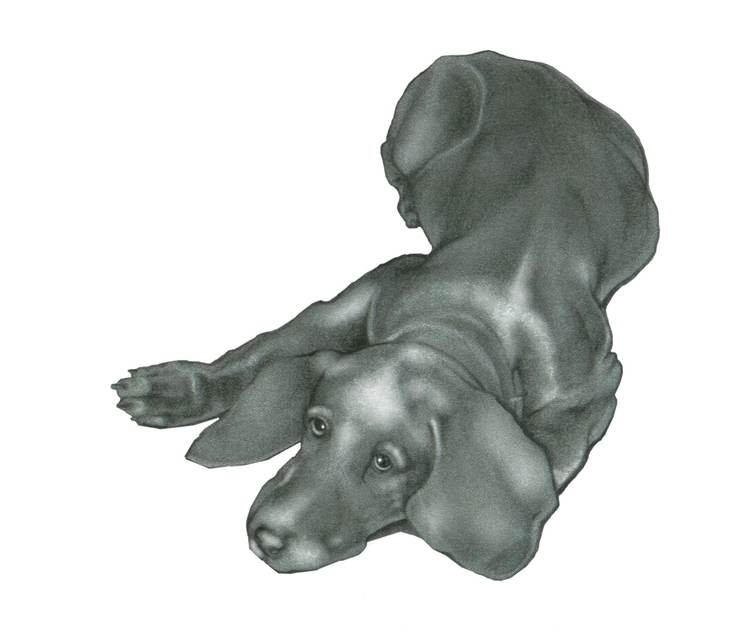 Commissioned dog portrait. Weim - mably   ello